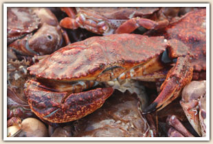 Pete's Fish Market Live Crab