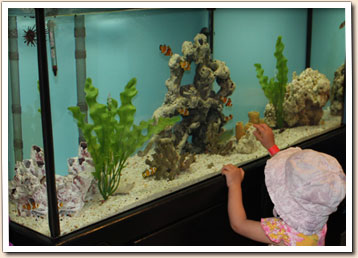 Little girl watching fish