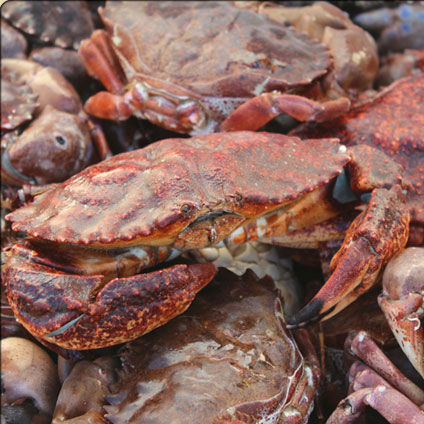 Fresh Local Crabs
